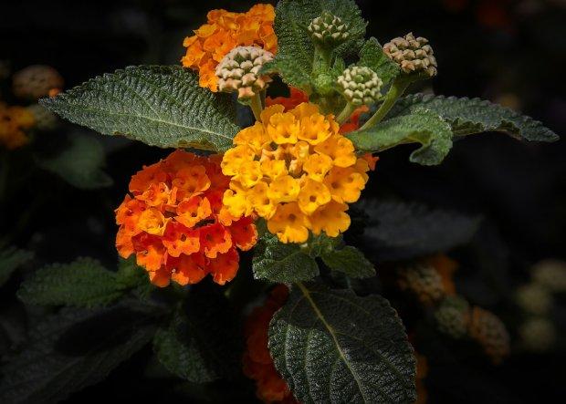 Le piante da coltivare in estate con fiori resistenti al ...